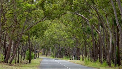 Mount Archer National Park