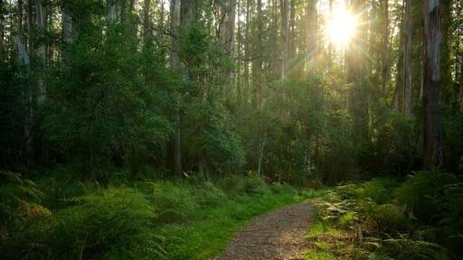 Forêt de Sherbrooke