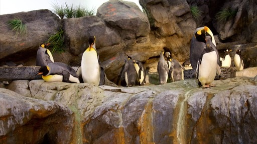 St. Louis Zoo showing cuddly or friendly animals, bird life and zoo animals