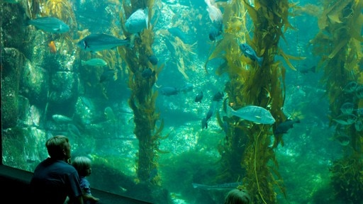 Birch Aquarium showing marine life and interior views