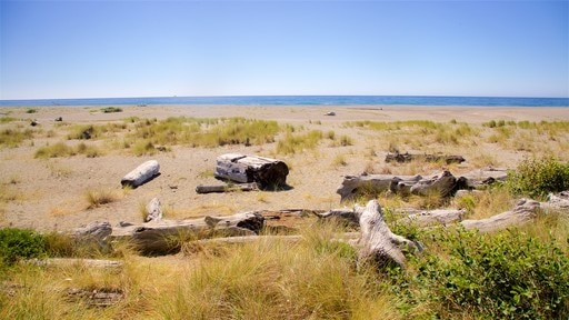 Search Hotels Near Top Redwood National And State Parks Attractions Gold Bluffs Beach