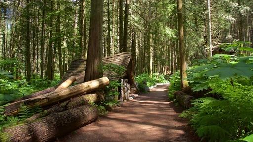 마법의 숲