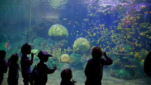 Seaworld featuring marine life, coral and interior views