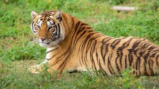 Zoológico Tuzoofari