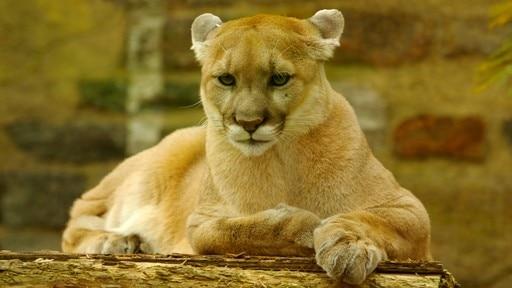 필라델피아 동물원