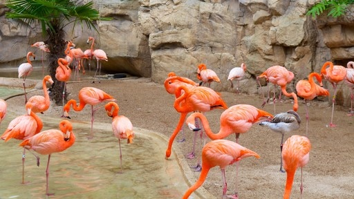 San Antonio Zoo and Aquarium which includes bird life and zoo animals