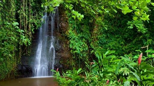 The Water Gardens of Vaipahi