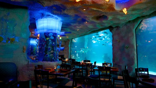 Acuario Downtown