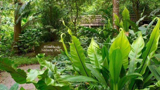 ブキ ティマ自然保護区