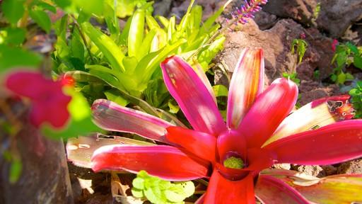 Jardines Botánicos de Puerto Vallarta