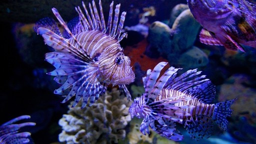 Ripley\'s Aquarium of the Smokies showing marine life