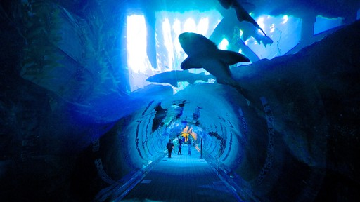 Dubai Mall which includes interior views and marine life as well as a small group of people
