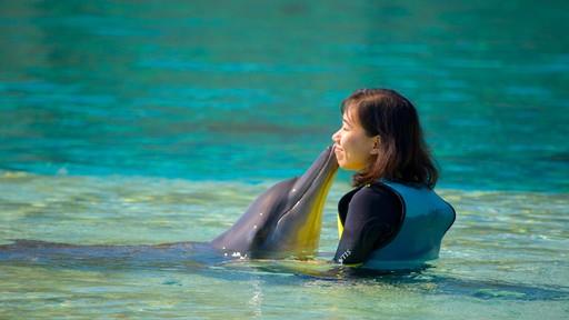 Parc aquatique Aquaventure