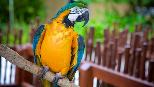 Naples Zoo at Caribbean Gardens featuring zoo animals and bird life