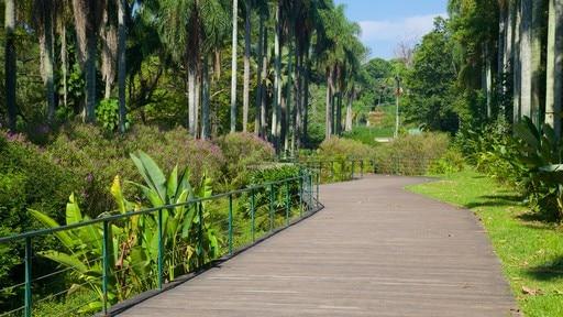 Jardin botanique de São Paulo