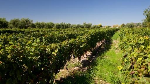 라가르데 와인 양조장