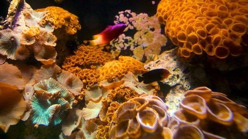 Aquarium van Key West