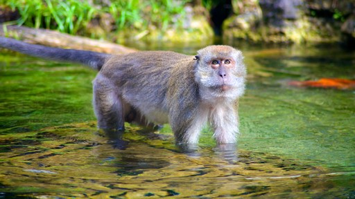Monkey Jungle which includes cuddly or friendly animals, a pond and zoo animals