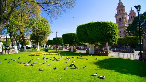 Plaza de Armas featuring a park and bird life