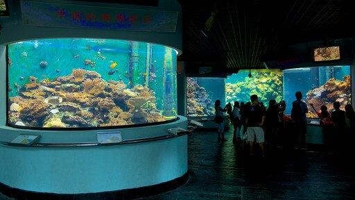 National Museum of Marine Biology and Aquarium