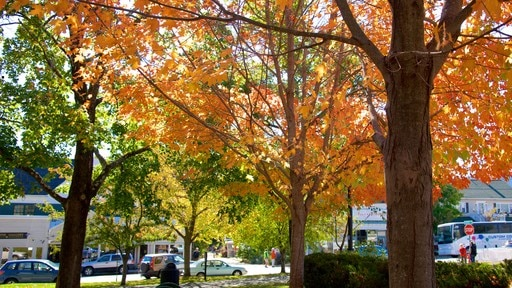 Village Green which includes fall colors and a park
