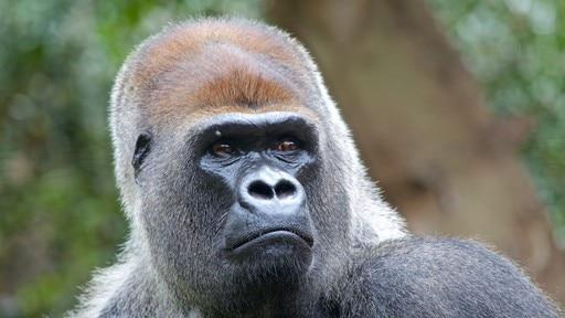 Zoológico Loro Parque
