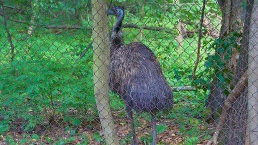 Schoenbrunn Zoo