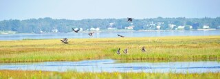 Bathurst which includes general coastal views, wetlands and bird life
