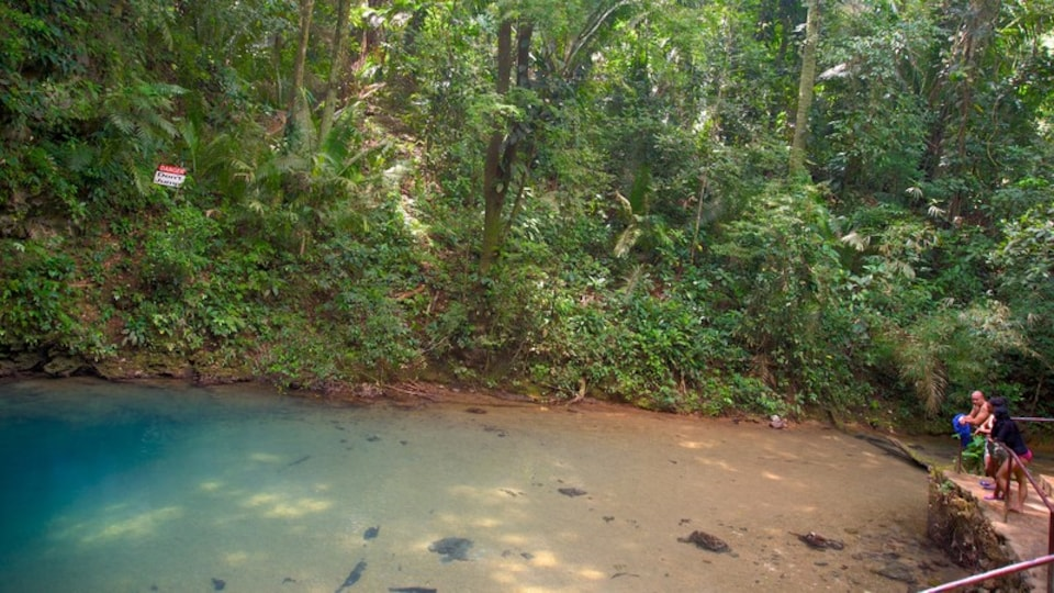 Blue Hole National Park showing rainforest and a lake or waterhole