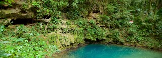 Blue Hole National Park which includes a lake or waterhole and rainforest