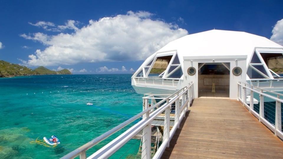 Coral World Ocean Park showing general coastal views and marine life