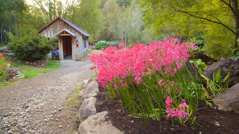 Flowers pictures view images of los pozones hot springs mightylinksfo