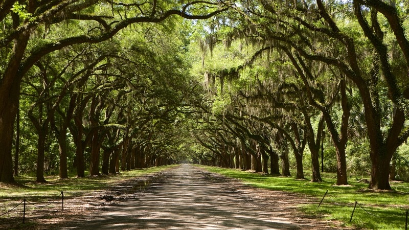 Wormsloe Historic Site which includes a garden