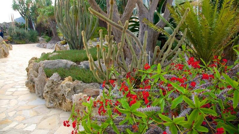 Exotic Garden featuring a park