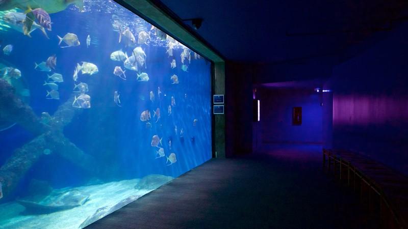 Marine Science Museum Va Beach