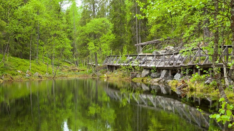 Pyhä-Luoston kansallispuisto