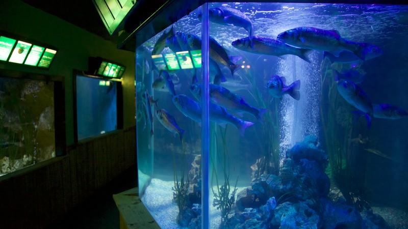 Resultado de imagen para Sea Life Sanctuaryo