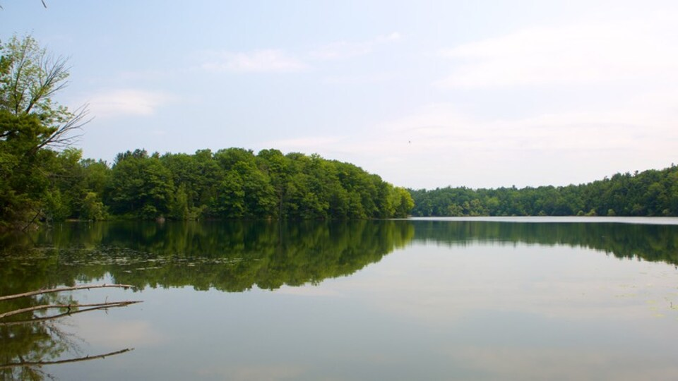 Richmond Hill showing a lake or waterhole