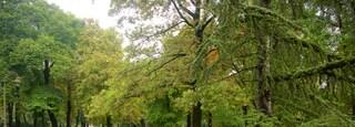Kalemegdan Park which includes a garden