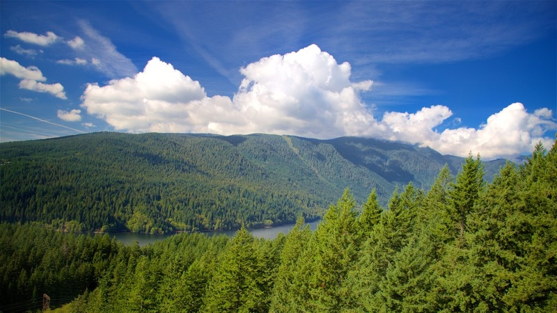 Grouse Mountain showing a lake or waterhole, forests and mountains