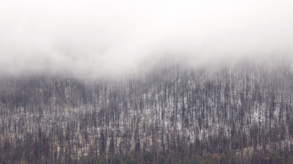 Jemez Springs showing forests, mist or fog and snow