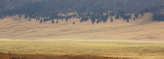 Jemez Springs showing farmland and mist or fog