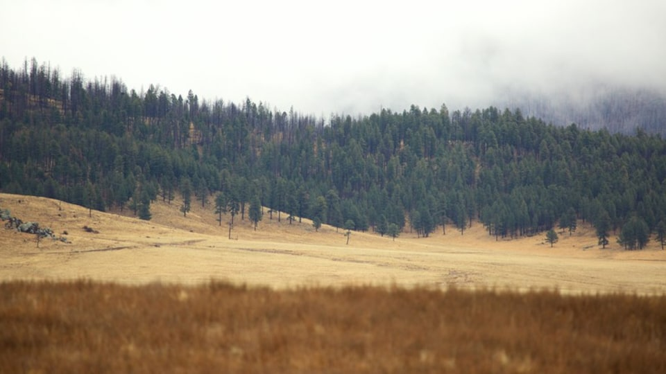 Jemez Springs which includes forests, farmland and mist or fog