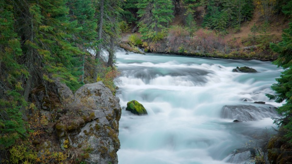 Deschutes National Forest which includes rapids and forest scenes