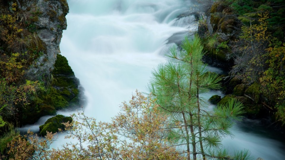 Deschutes National Forest featuring forest scenes and rapids