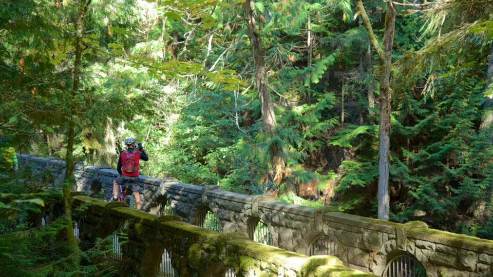 Whatcom Falls Park showing a bridge, mountain biking and forest scenes