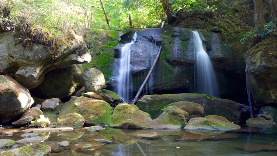 Whatcom Falls Park featuring a waterfall, forest scenes and a river or creek
