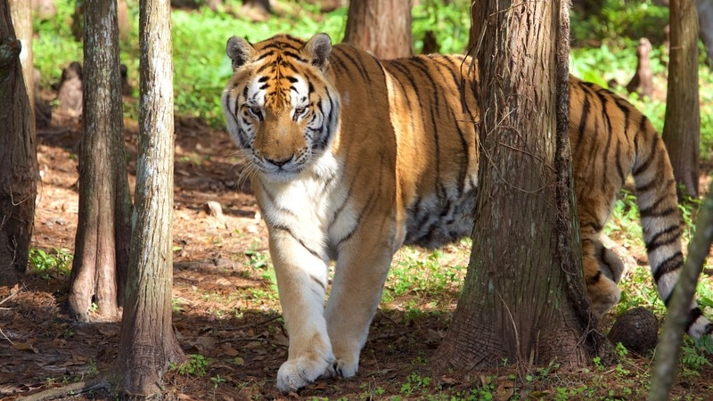 Big Cat Rescue which includes dangerous animals and zoo animals