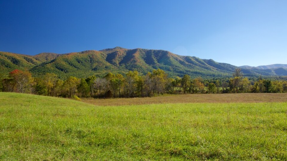 Cades Cove which includes mountains and landscape views