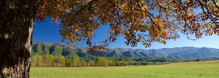 Cades Cove which includes tranquil scenes and mountains
